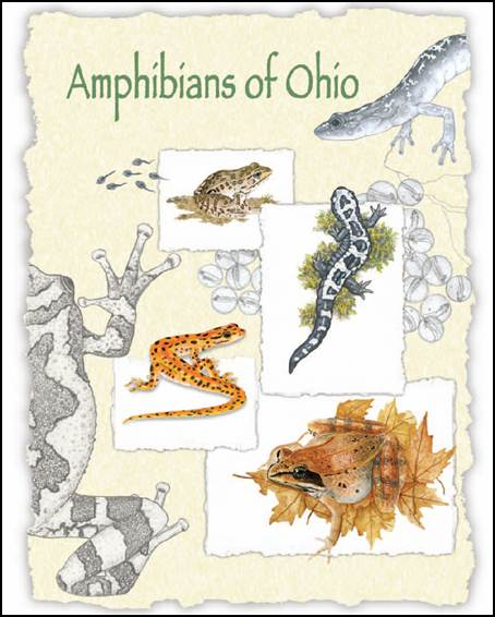 Amphibians of Ohio book cover